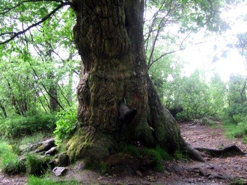 Baum mit Fuß