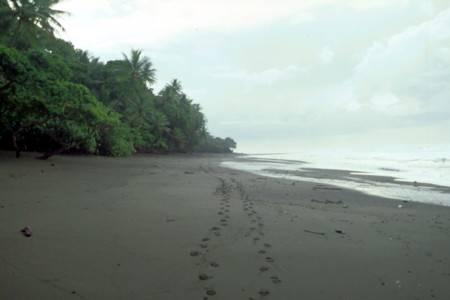 Am Strand der Halbinsel Osa